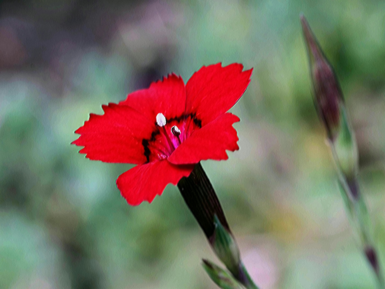 klein und schön rot