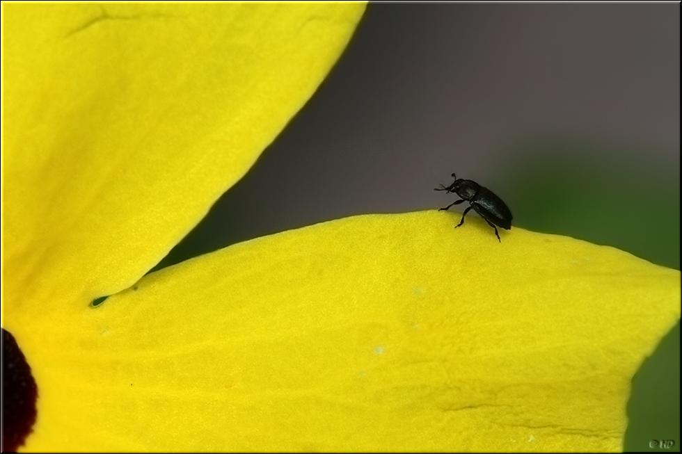 klein und schwarz foto bild tiere wildlife insekten bilder auf fotocommunity. Black Bedroom Furniture Sets. Home Design Ideas