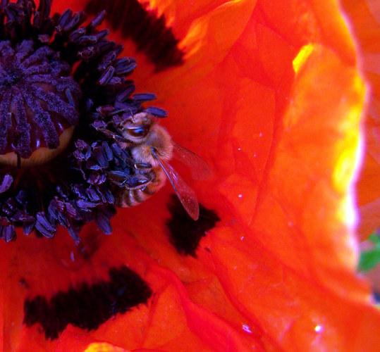 Kleine Biene - riesen Hunger