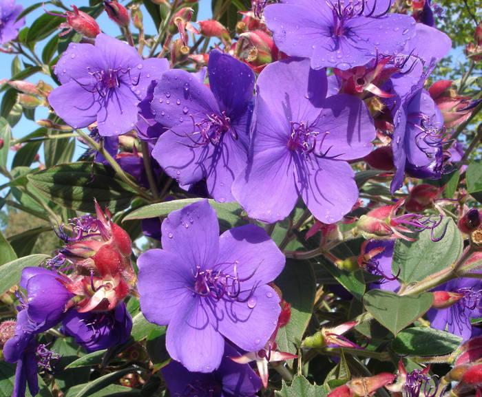 Kleine blaue Blüten