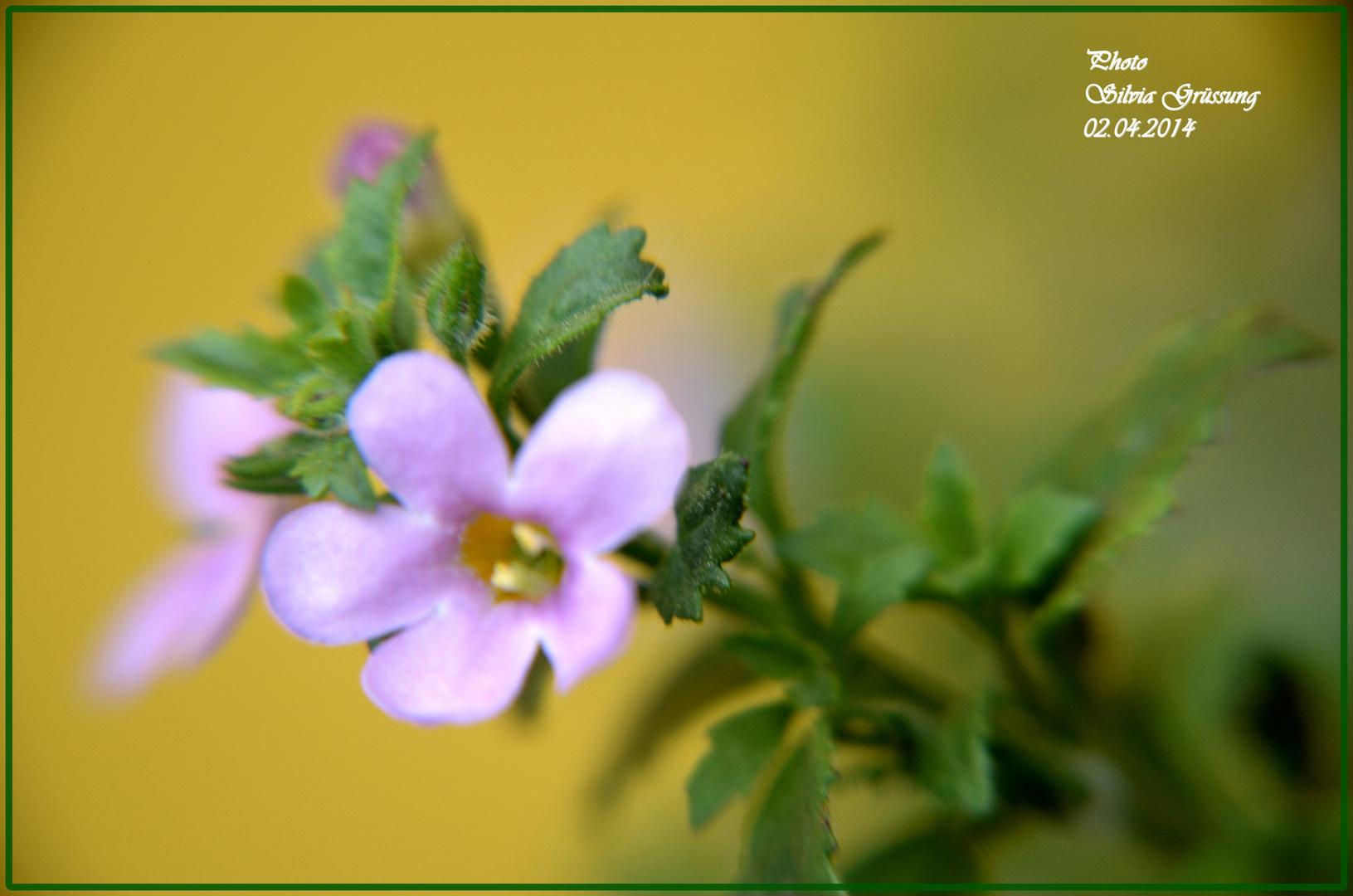 kleine Blüte ganz groß