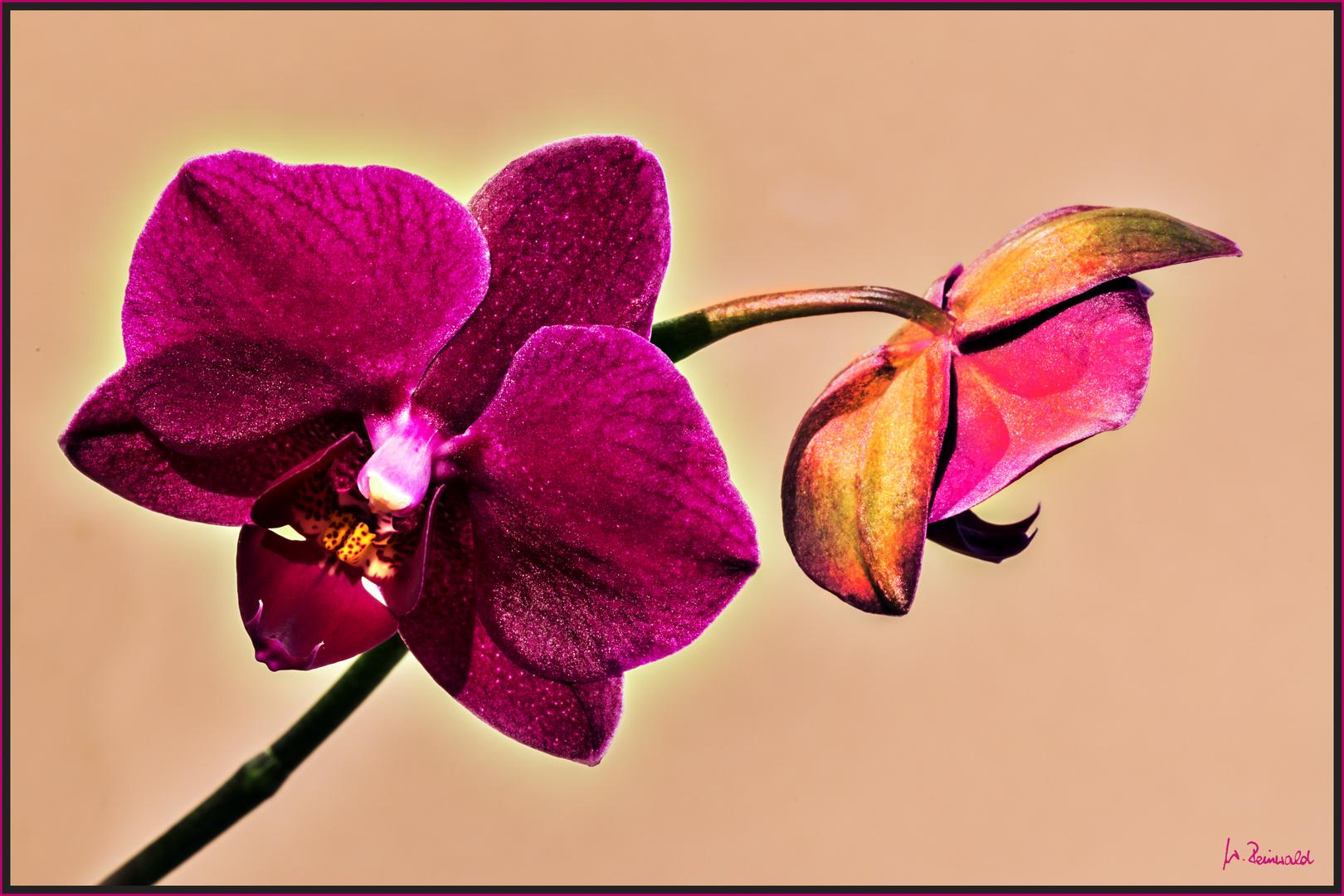 Kleine Blüte - ganz groß