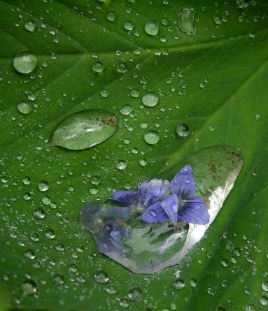 Kleine Blüte in grossem Regentropfen
