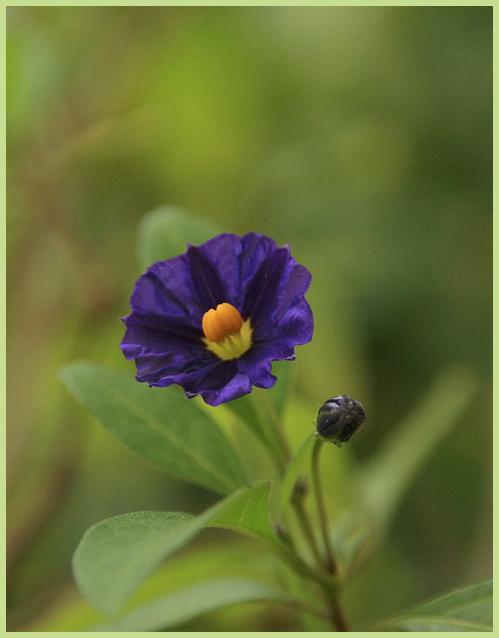 Kleine Blüten ganz groß