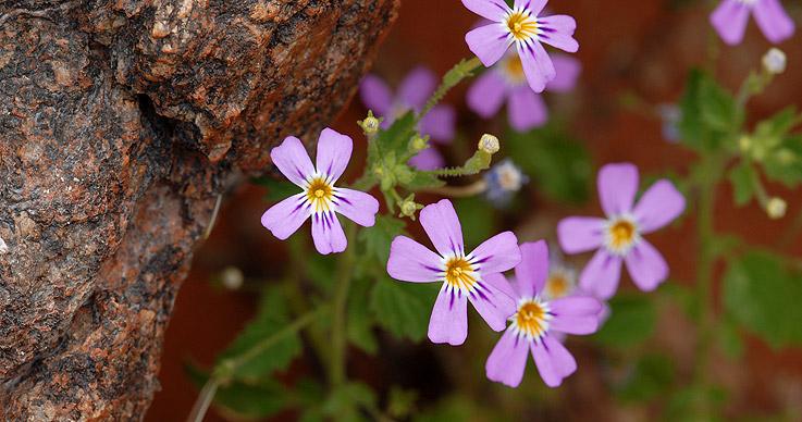 Kleine Blüten in der Natur