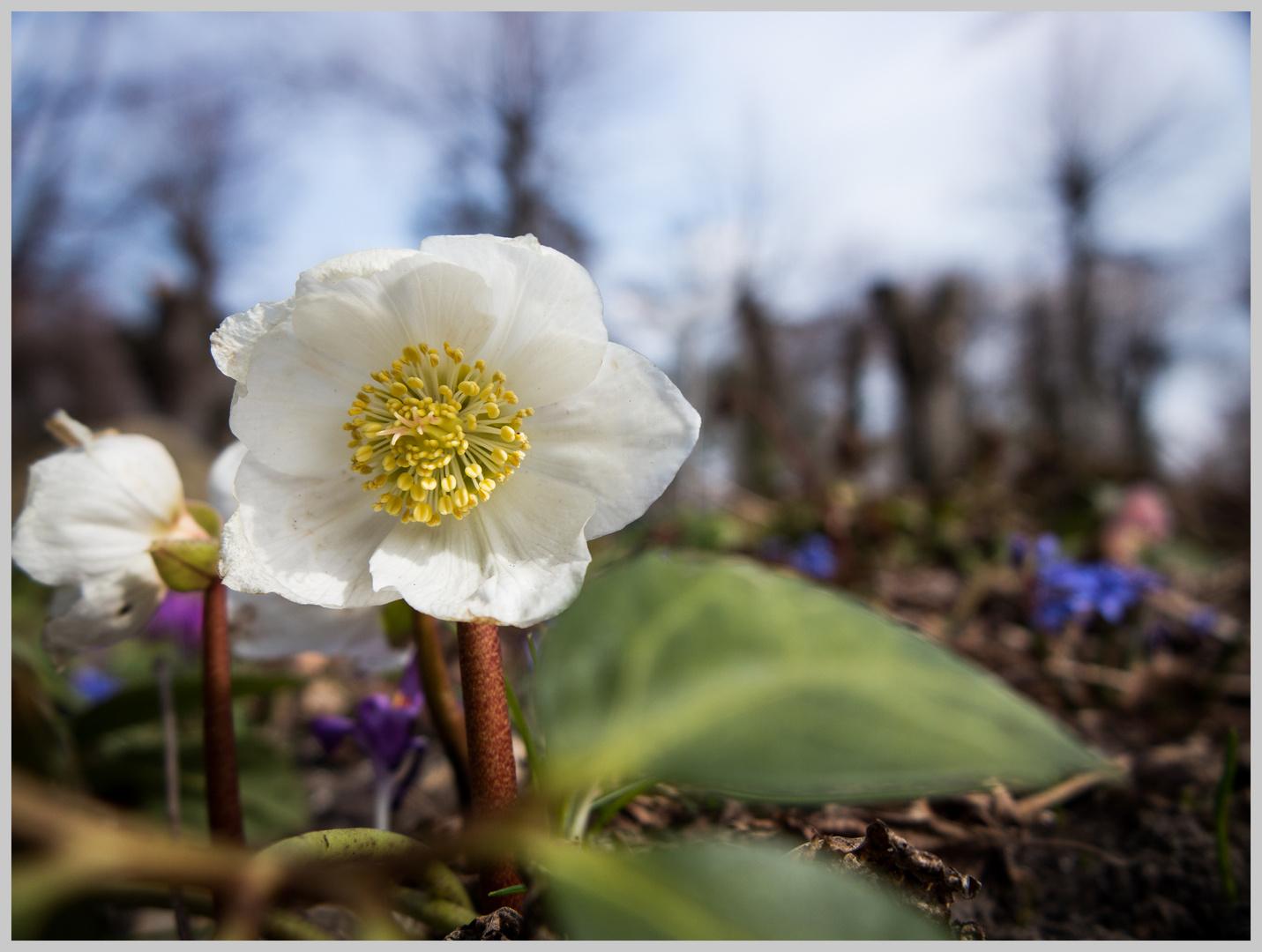 Kleine Blume
