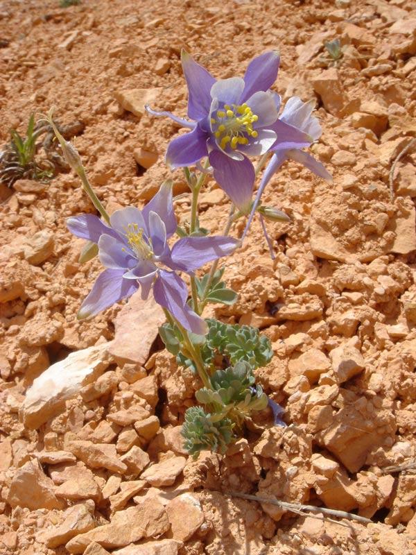 Kleine Blume auf ehemaligem Hoodoo