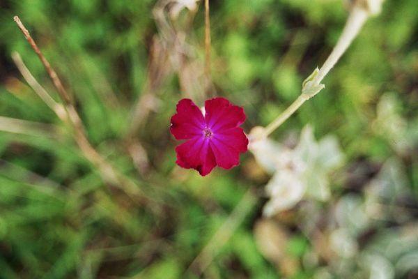 Kleine Blume in 3D
