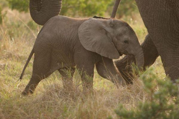 kleine Elefanten sind ja soooooo süüüüßßß!!