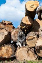 """kleine"" Enja - große Baumstämme"