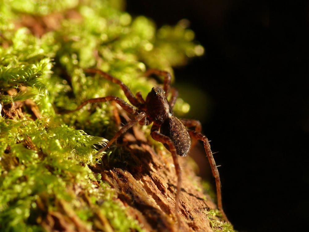 kleine Entdeckung auf dem Waldboden