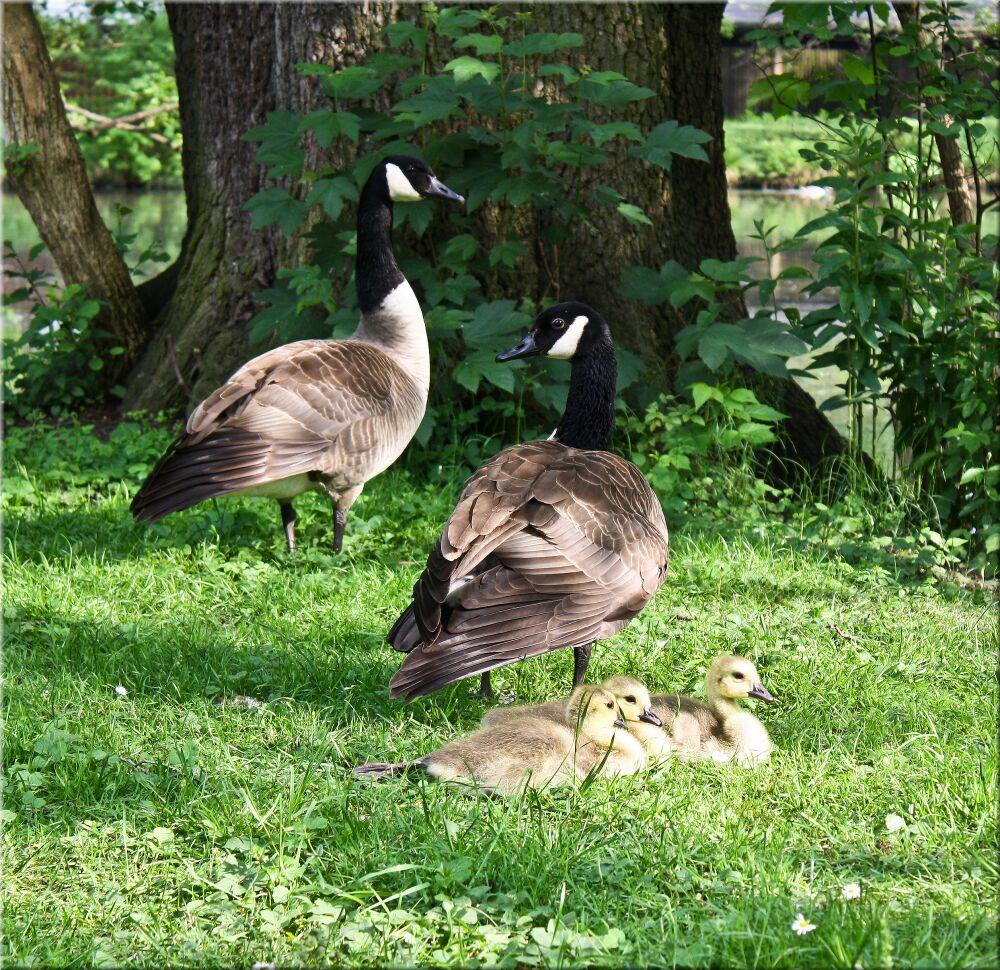 kleine Familie