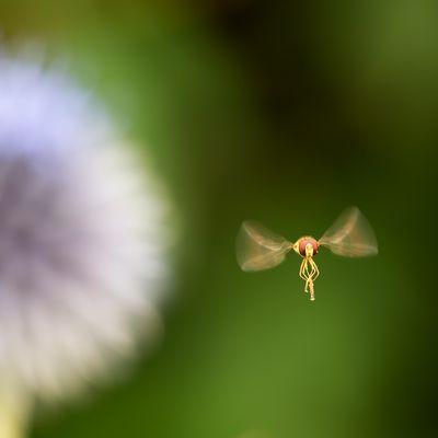 kleine Fee fliegt heim [Lillifee]