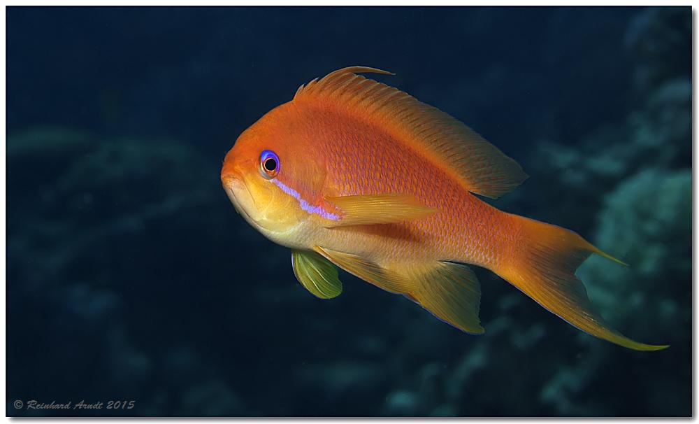 Kleine fische 2 foto bild natur unterwasser natur for Kleine fische