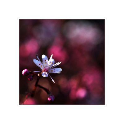 kleine Flower Power
