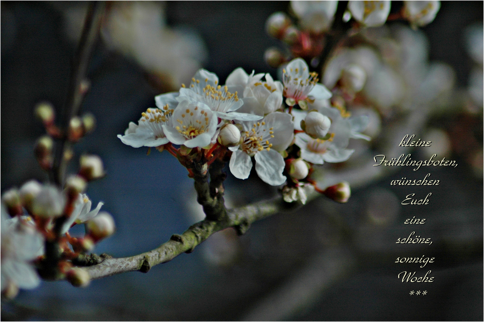*kleine Frühlingsboten*