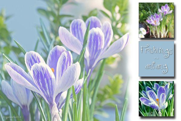 Kleine Frühlingsinspiration