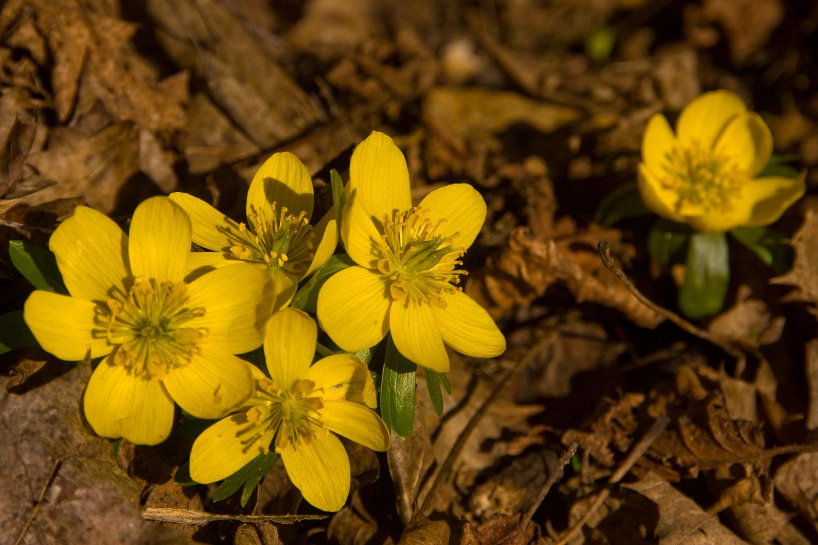Kleine gelbe Sonnen