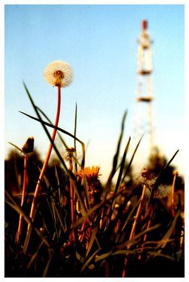 Kleine große Pusteblume