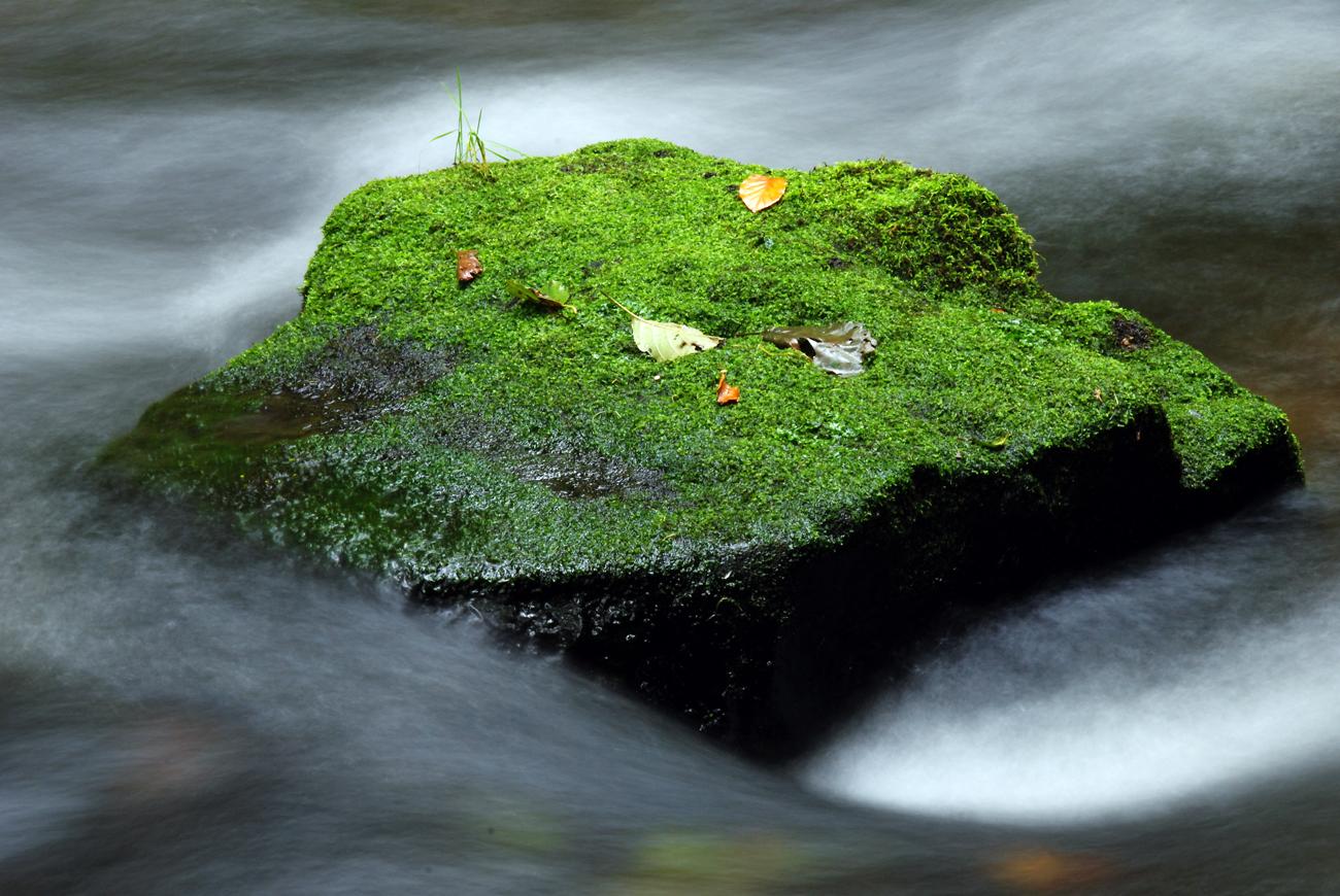 *** Kleine grüne Insel ***