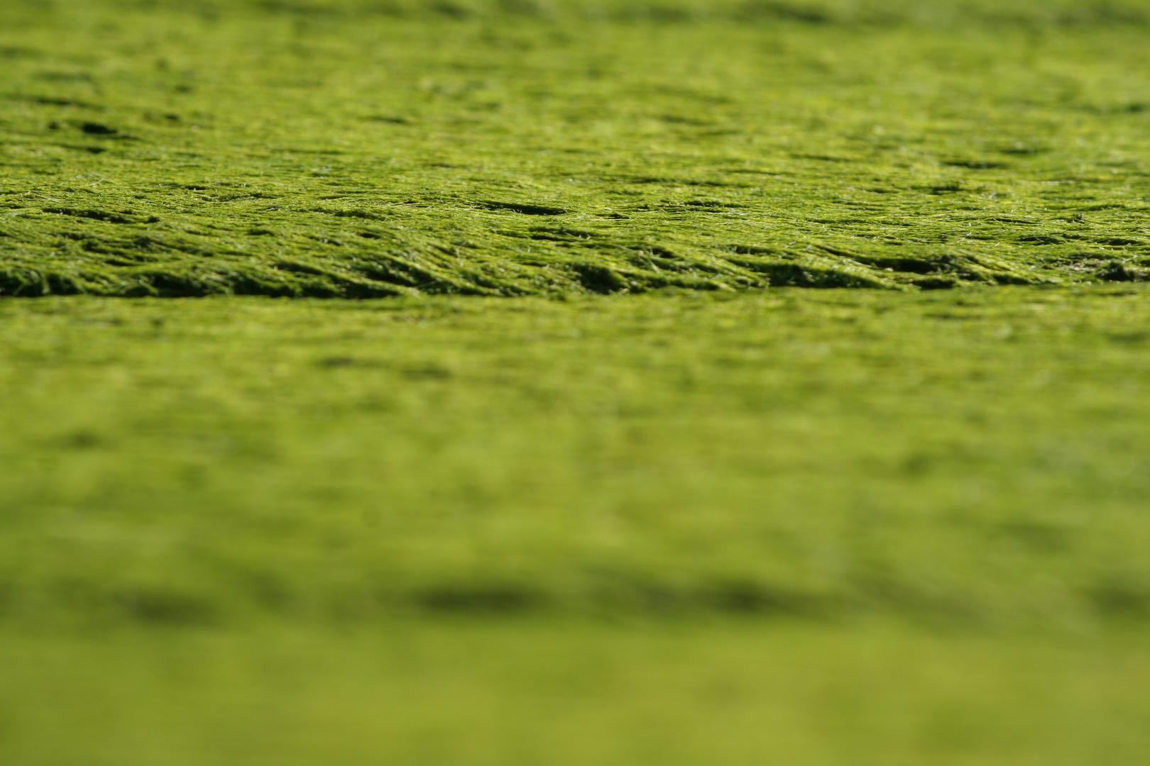 -- Kleine, grüne Landschaft --
