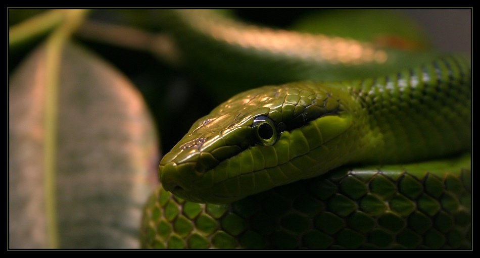 kleine grüne Schlange
