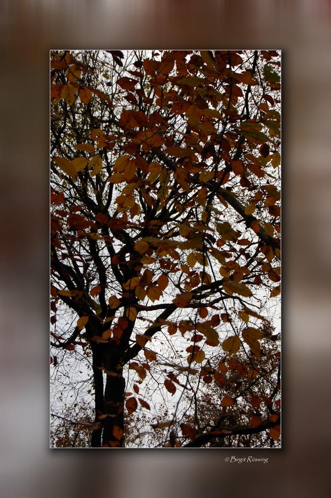Kleine Herbstimpression