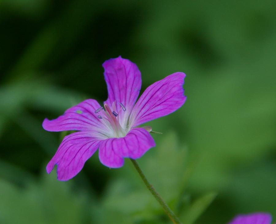 kleine in lila foto bild pflanzen pilze flechten bl ten kleinpflanzen gartenpflanzen. Black Bedroom Furniture Sets. Home Design Ideas
