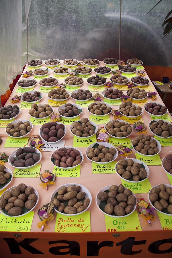 Kleine Kartoffel-Kunde (1v.2)