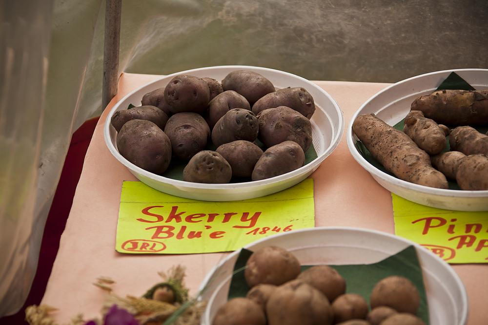 Kleine Kartoffel-Kunde (3)