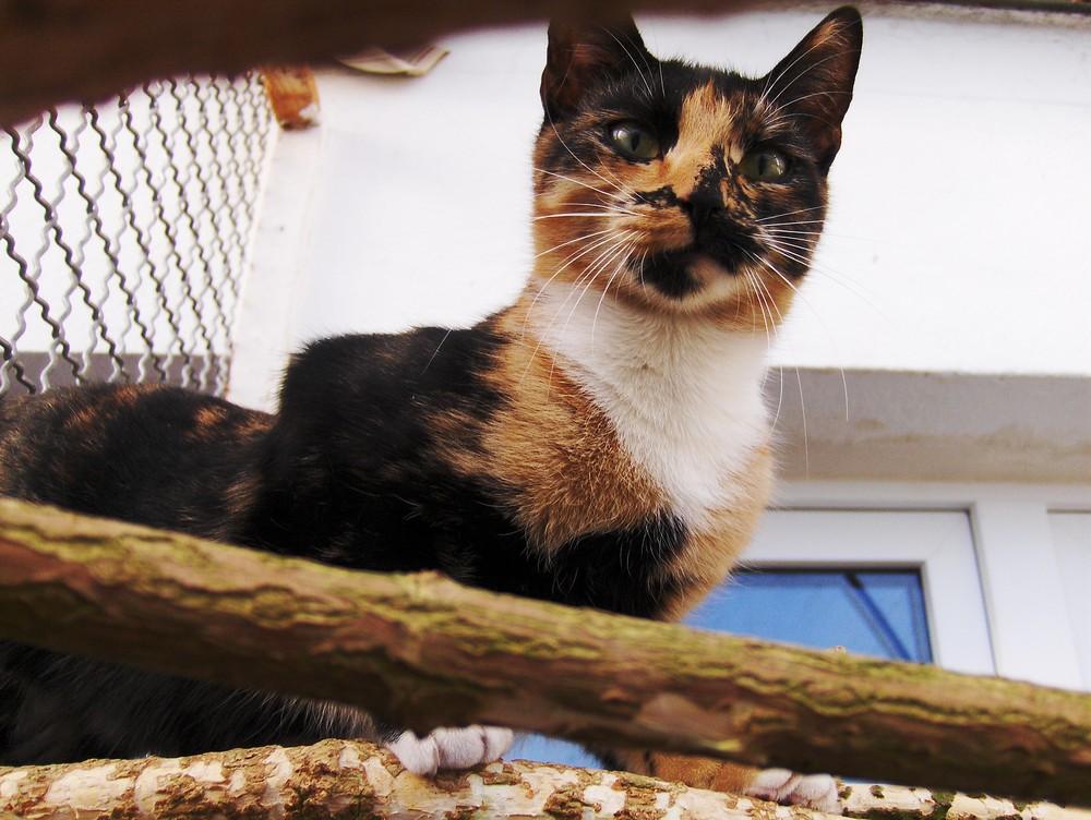 Kleine Katze auf Klettertour