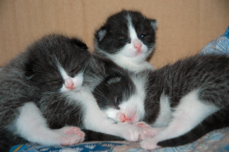 kleine katzen schlafen gut foto bild tiere haustiere. Black Bedroom Furniture Sets. Home Design Ideas