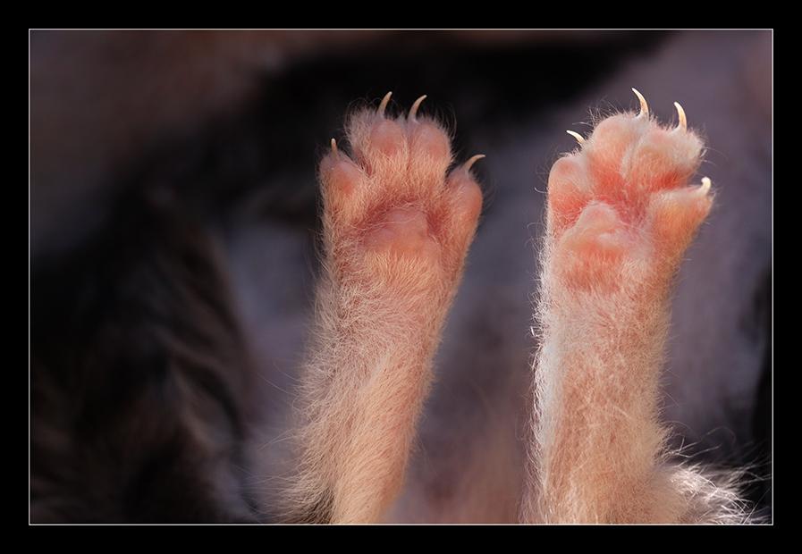 Kleine Katzis ...