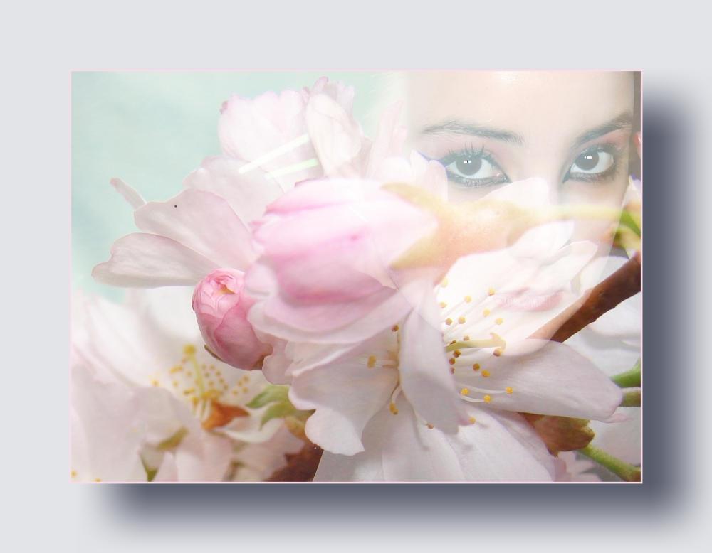 kleine Kirschblüte