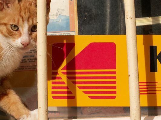 kleine Kodak Katze