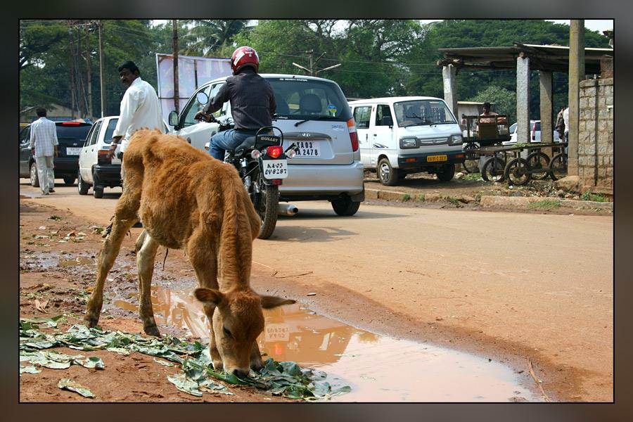 kleine Kuh in Bangalore