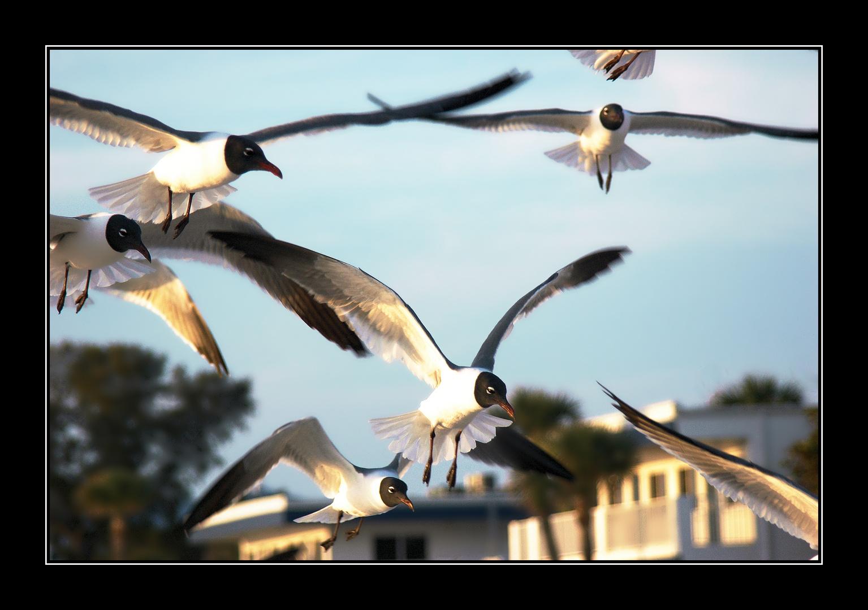Kleine Möwe - flieg nach Helgoland