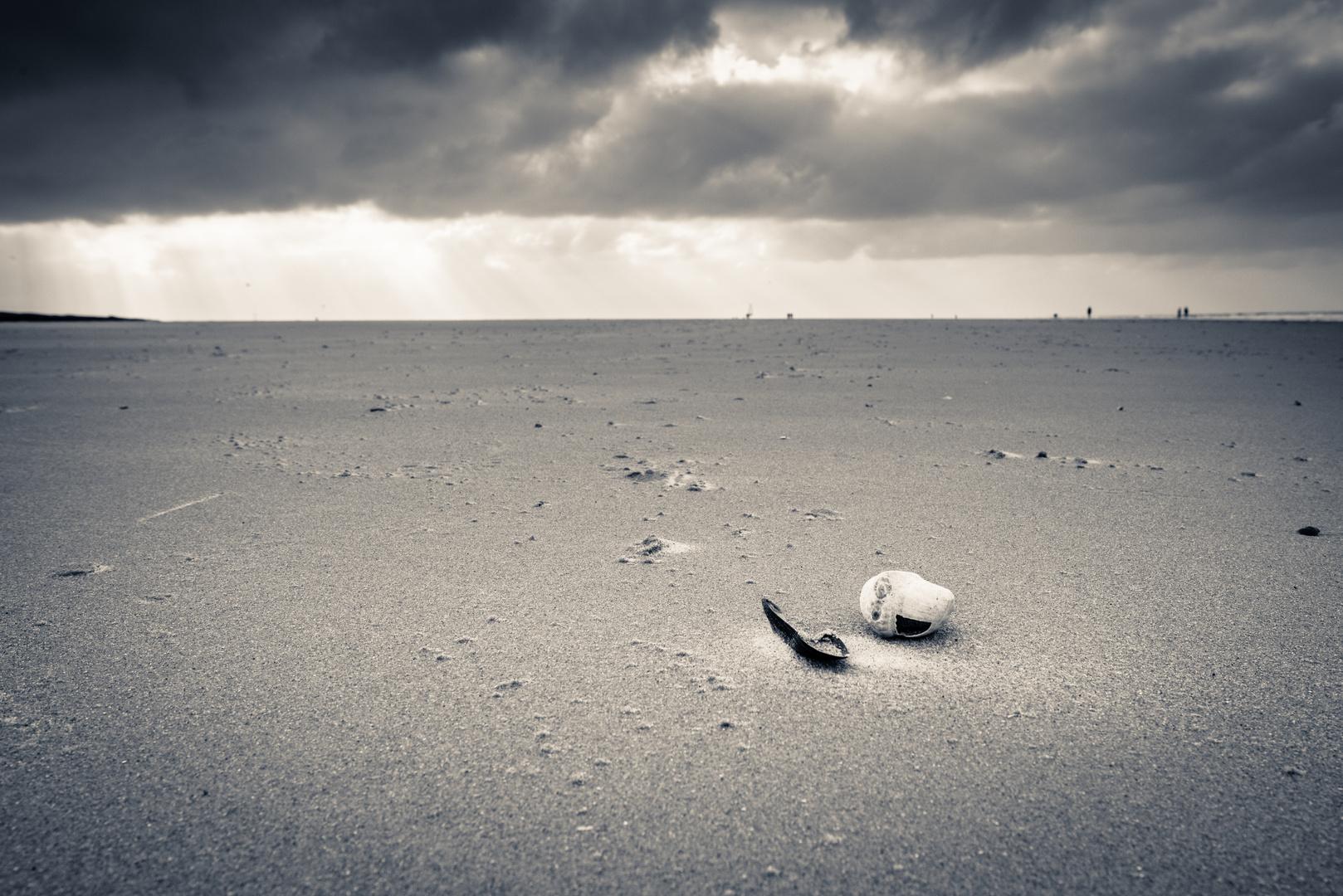 Kleine Muschel am großen Strand