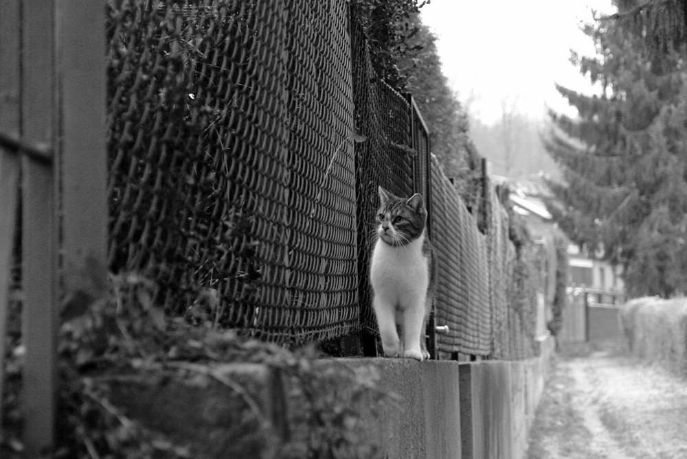 kleine neugierige Bonnie