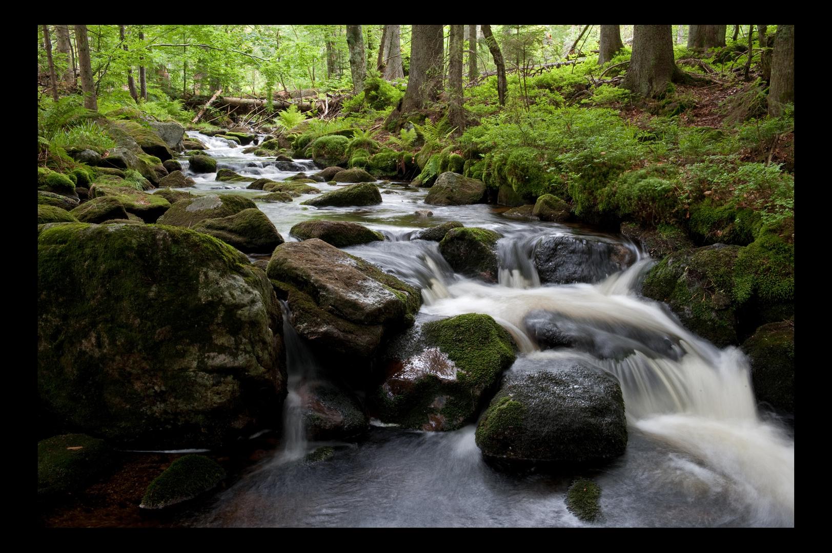 Kleine Ohe (2) - Nationalpark Bayerischer Wald