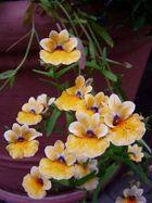 kleine Orchidee