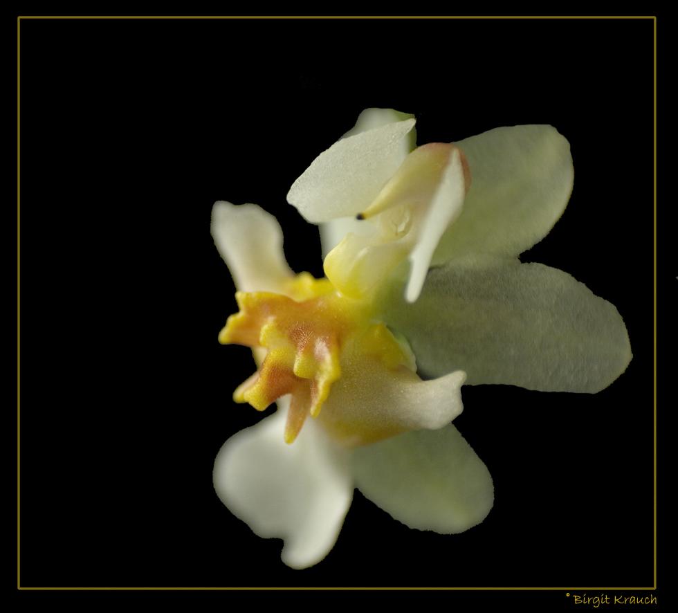 Kleine Orchideenblüte