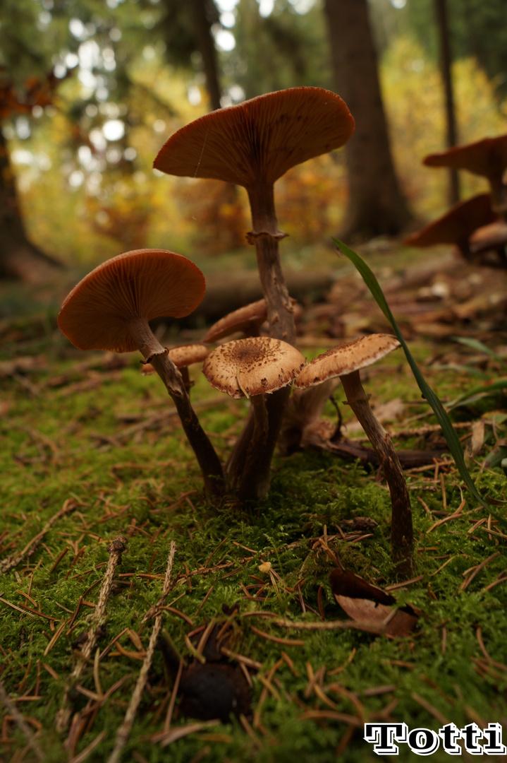 Kleine Pilz Gruppe