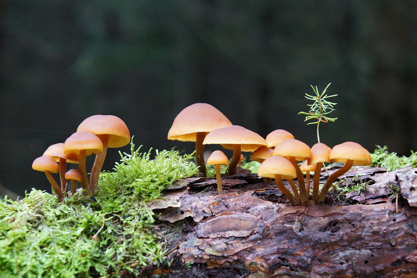 Kleine Pilz-Landschaft