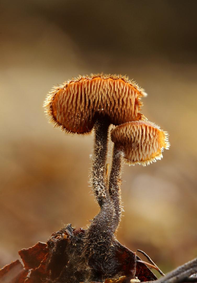 Kleine Pilzchen