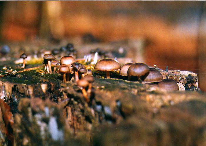kleine Pilze 2