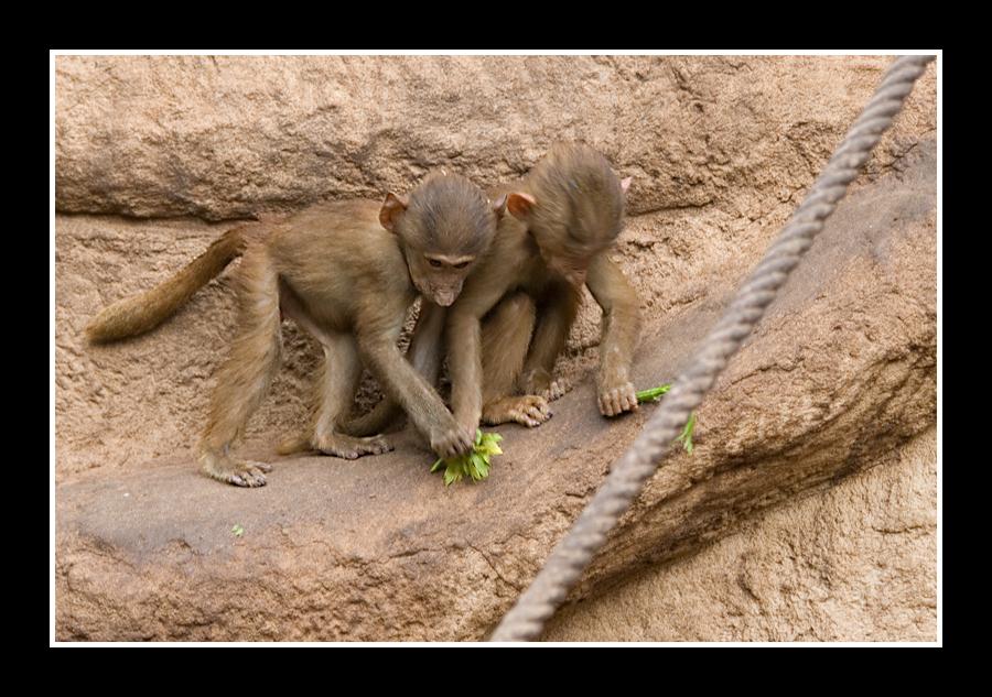 Kleine Rabauken