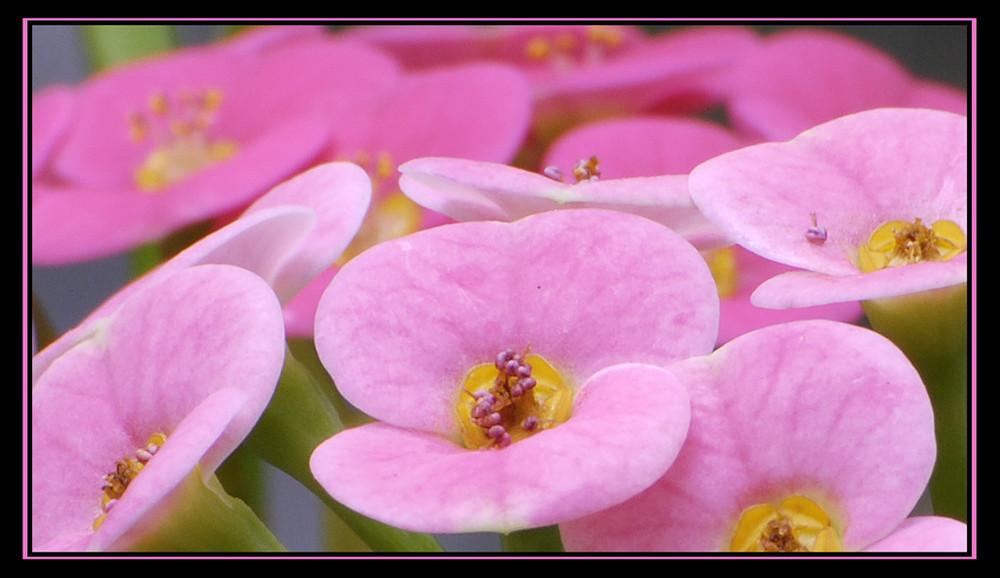 kleine rosa Farbtupfer