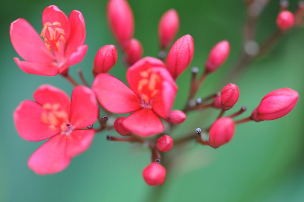 kleine rote blume foto bild pflanzen pilze flechten natur bilder auf fotocommunity. Black Bedroom Furniture Sets. Home Design Ideas