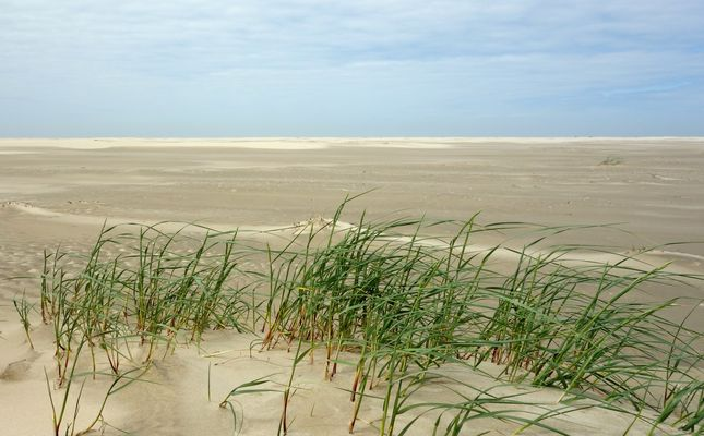 Kleine Sandgrasoase in weiter Wattlandschaft...